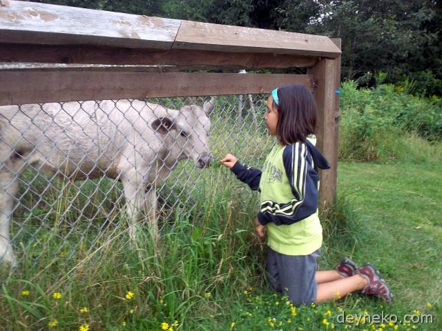 Как я общалась с животными в кемпинге