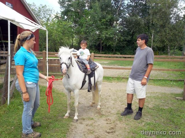 ребенок верхом на пони