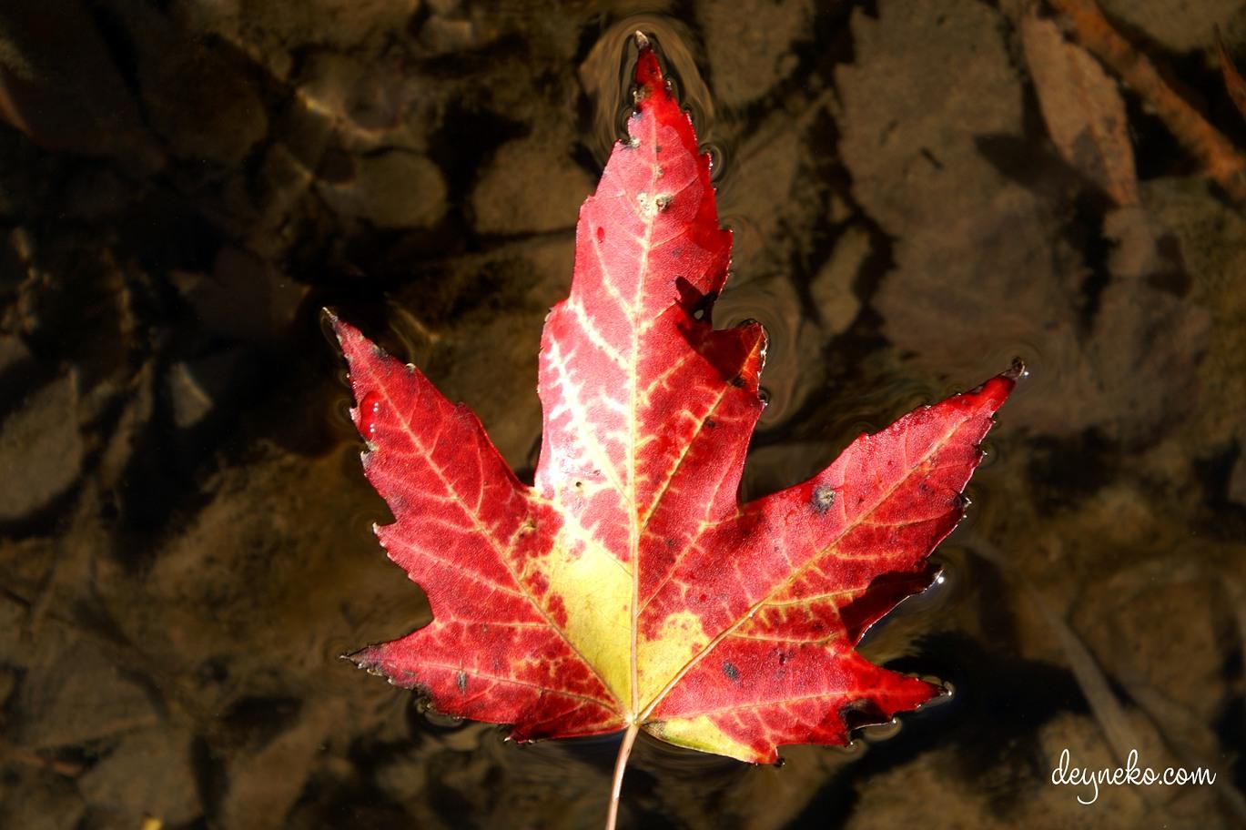 Как иммигрировать в Канаду по федеральной программе по баллам
