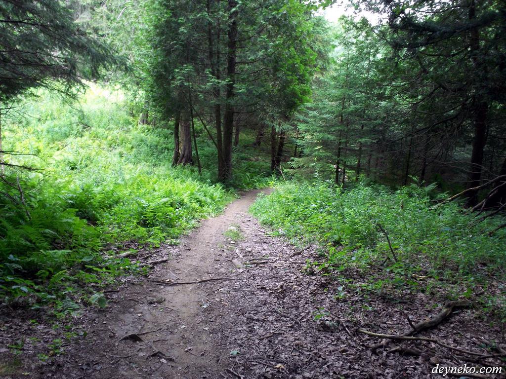 Beaux pistes pour faire du vélo dans la parc de la george de coaticook