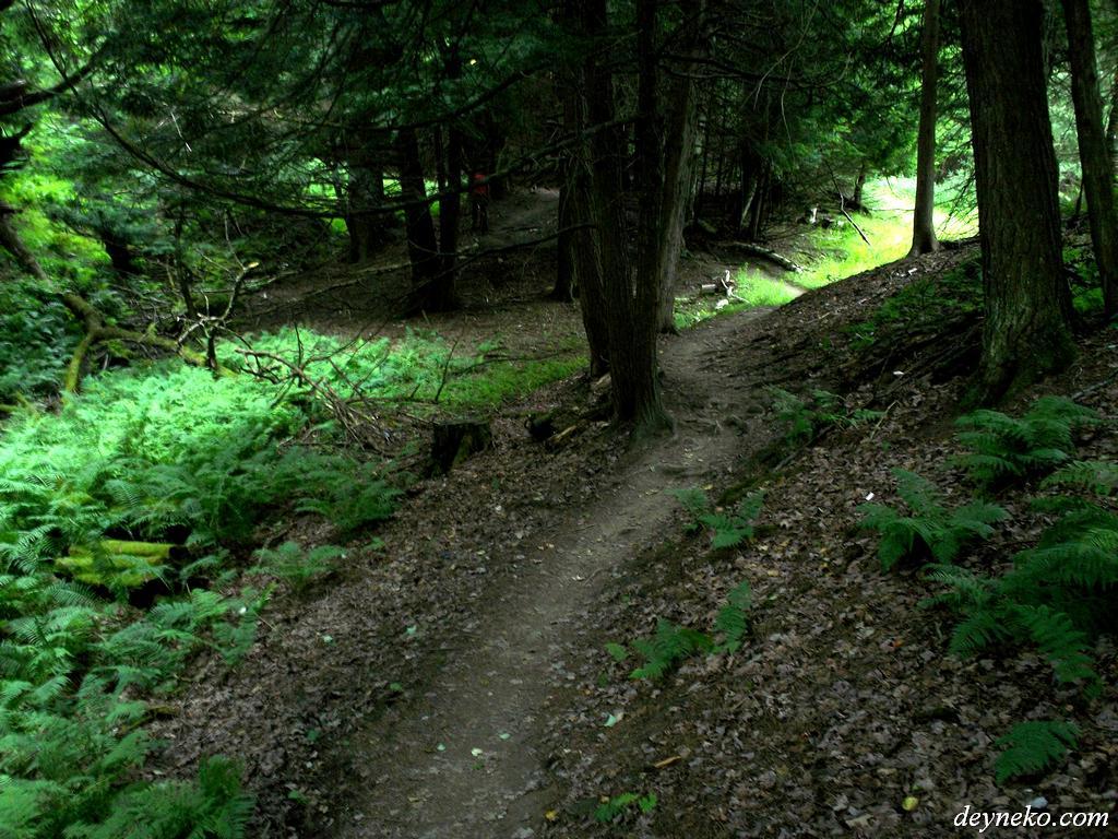 Gorge de coaticook vélo de montagne