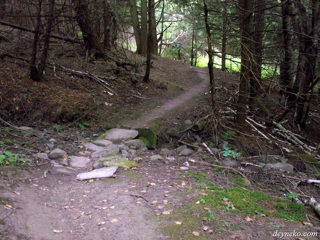 Parc de Gorge de Coaticook est plein des arbres