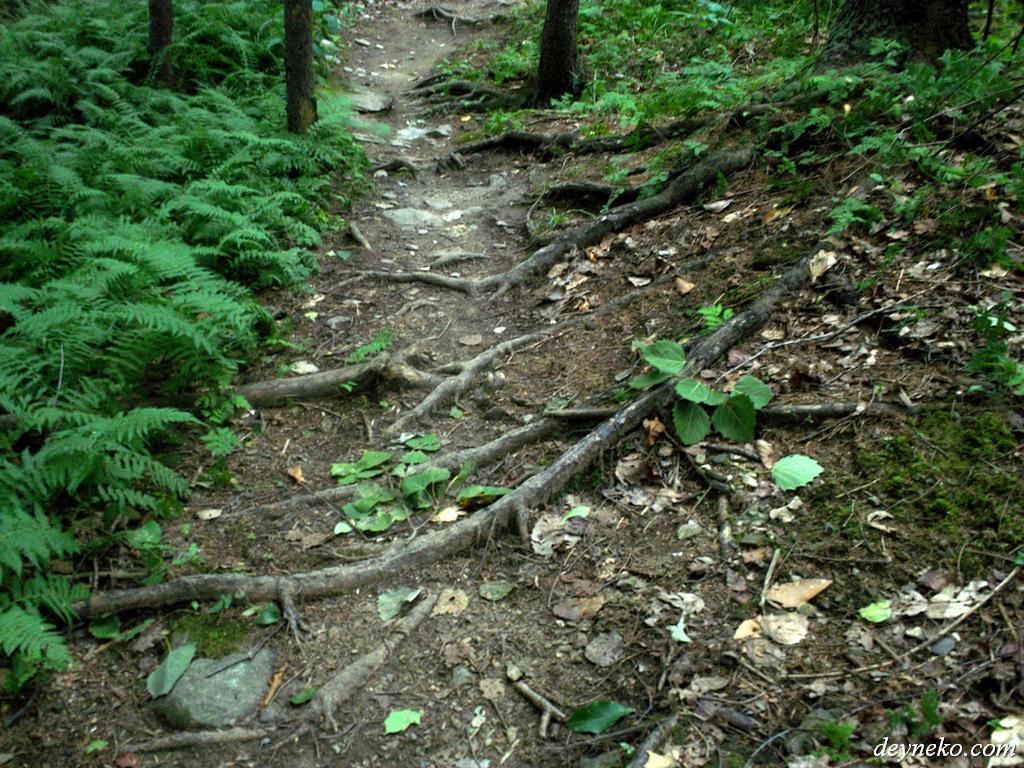 les racines des arbres du parc avec des pistes de vélo de montagne