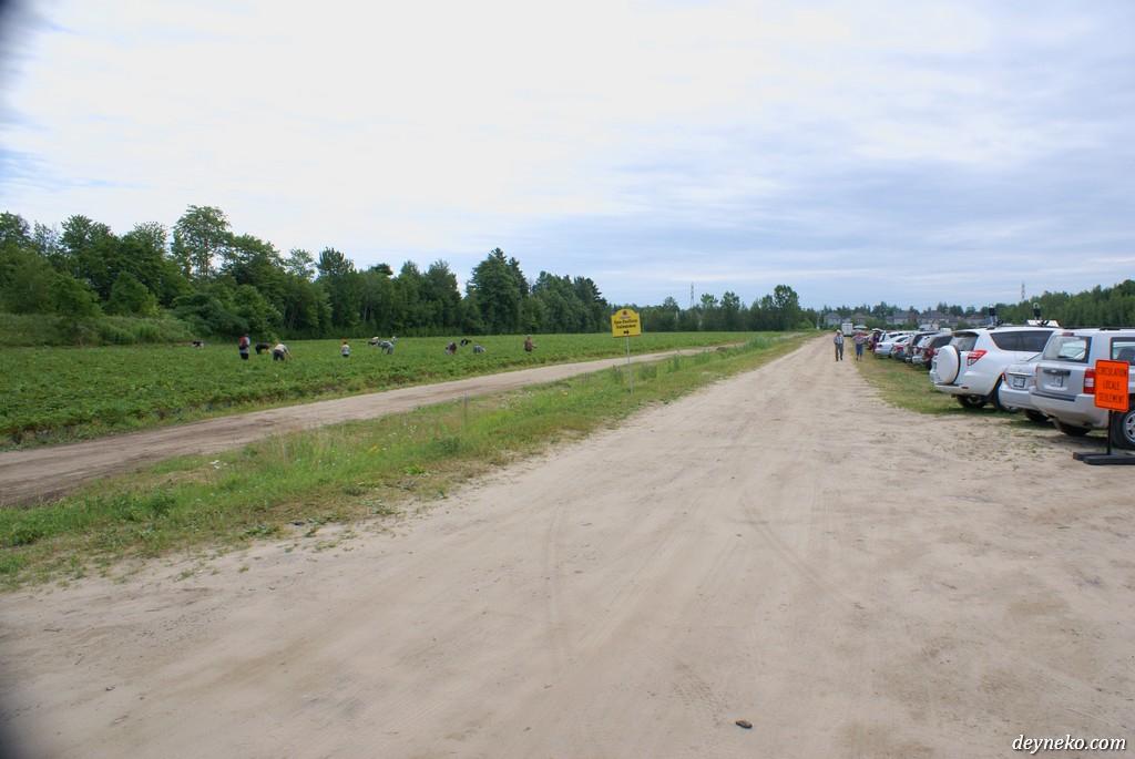 ягодная ферма недалеко от Монреаля