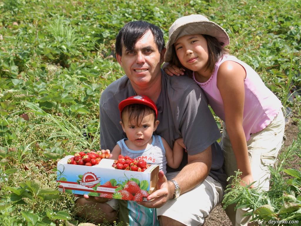 Канада - урожай клубники