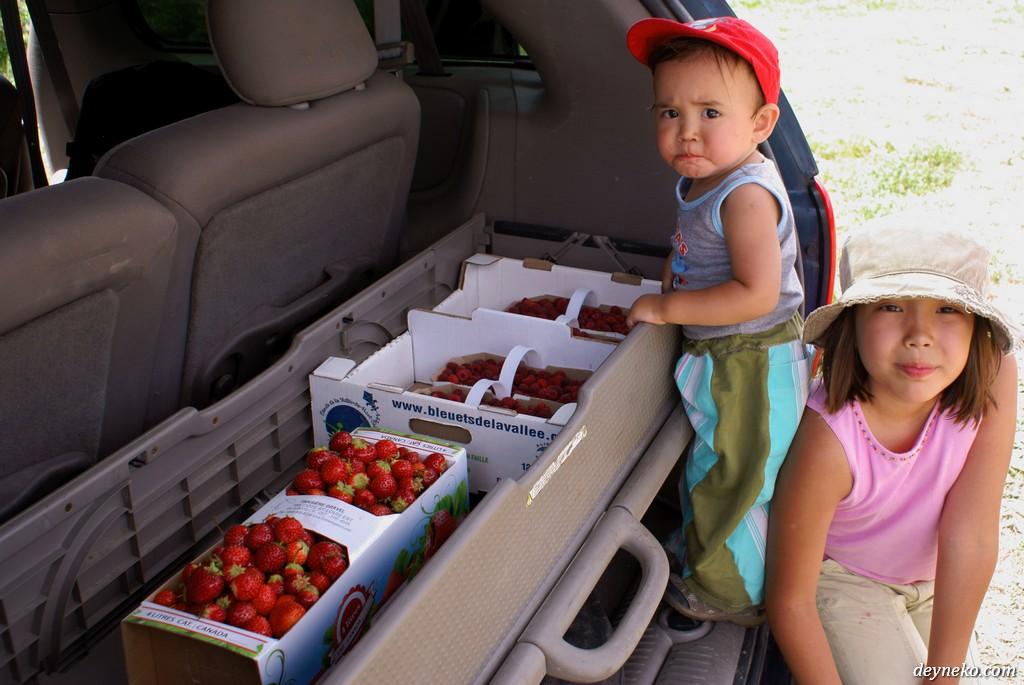 ягоды собранные недалеко от Монреаля