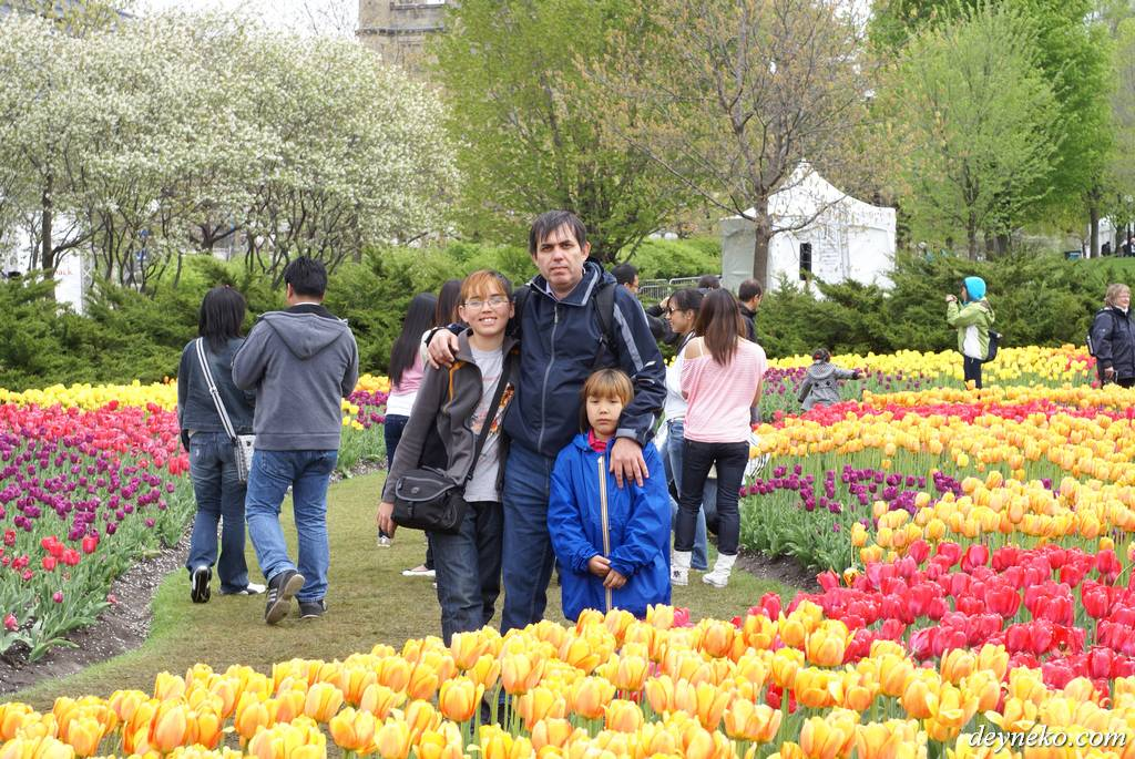 тысячи тюльпанов