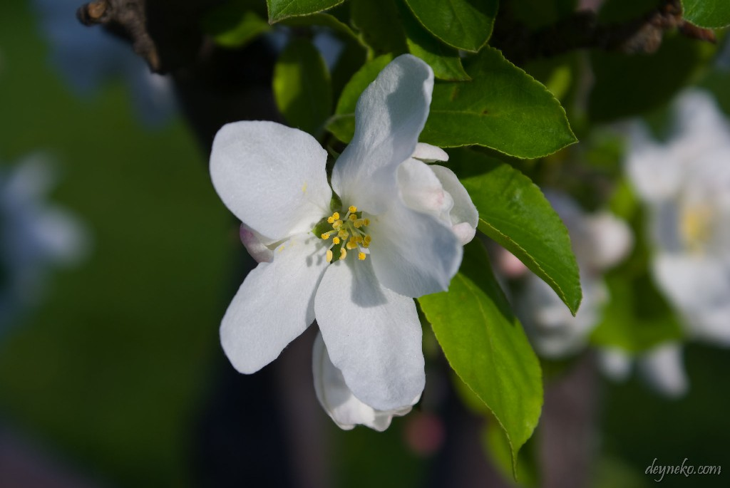 Это один из тех маленьких цветочков...